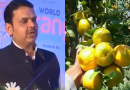 Nagpur Oranges.. You go global..!!